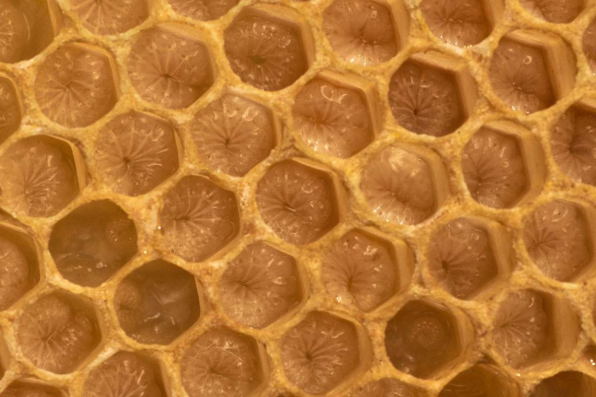 Honeycomb structures serve as a model for man made space structures